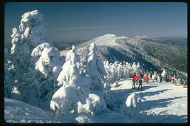 Sugarbush photo